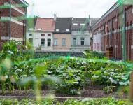 Roof Food - © Canopy Greenroofs